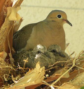 Mama bird and baby birds