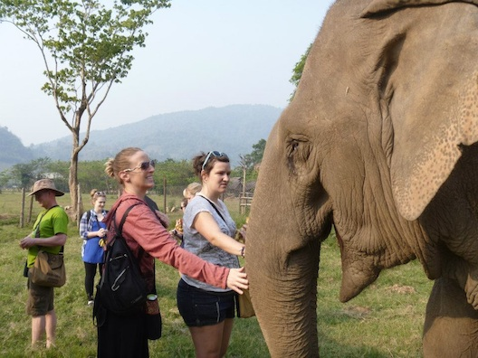 Volunteers at Elephant Nature Park in Thailand