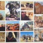 picture this: my africa photos and an amazing offer from wemontage