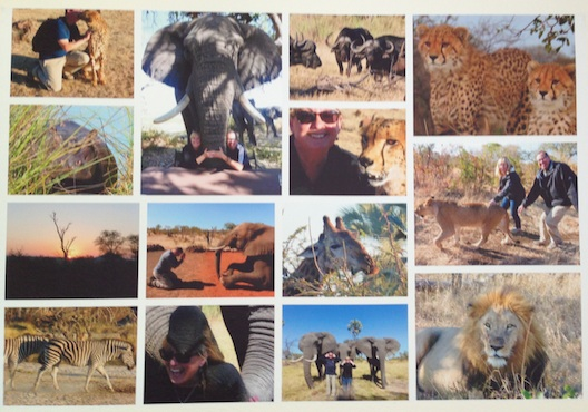 Montage of Lois Alter Mark's Africa pictures from WeMontage