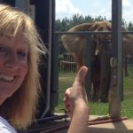 my buick bucket list trip: the elephant sanctuary in tennessee