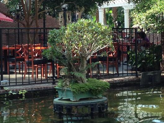 Opryland bonsai