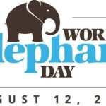it's world elephant day