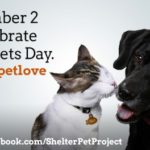 b is for bark. it's celebrate shelter pets day!