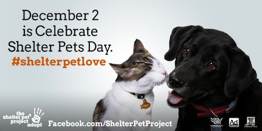 Celebrate Shelter Pets
