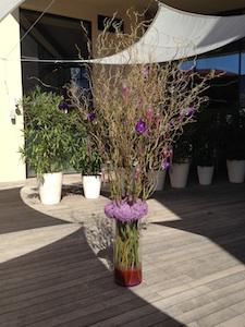 Renaissance Aix purple plant