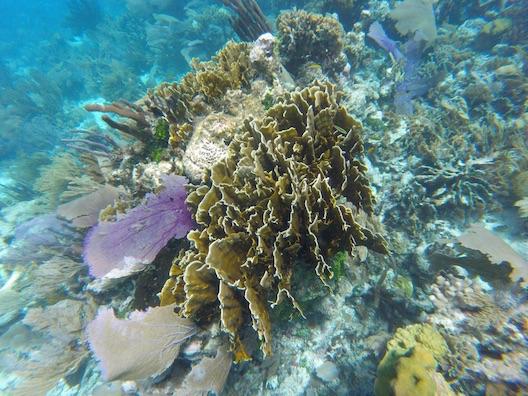 Hamanasi diving