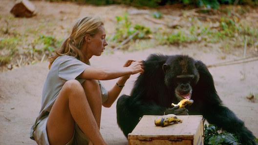 Jane Goodall and chimp